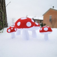 mushrooms 3
