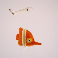 pesce-cavalluccio2